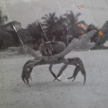 The land crabs that were the size of dinner plates and they would run around under the men's beds at night time. | Ernie Rogers
