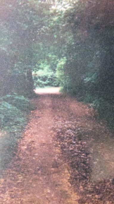 The private road which led from Badgers Way to Birchlea and Stanley's home | Pamela-Jeanetta Bird Gaines