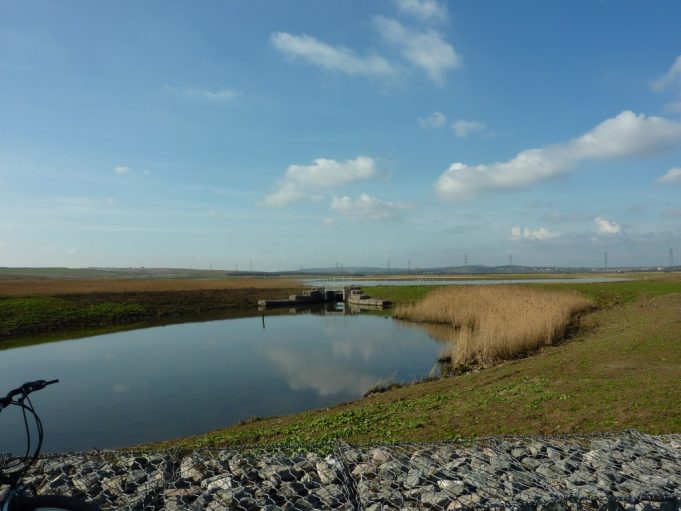 One of the wildlife ponds with Benfleet in the background.
