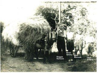 Cutting the hay | Harry Emery