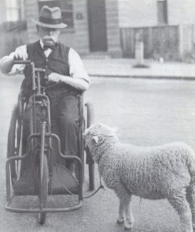 Ted Land Senior with his pet lamb