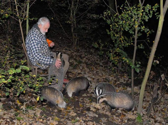 Don Hunford with his badgers | The Essex Badger Protection Group