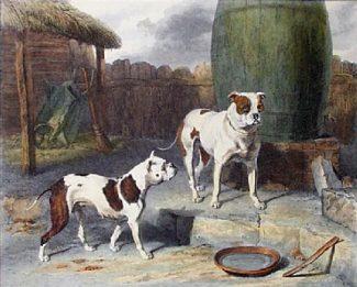 The gentleman who bred champion bulldogs