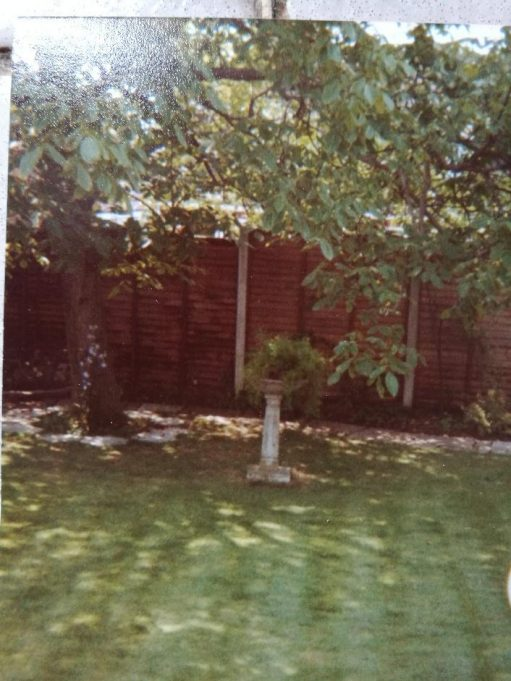 In Albinia's back garden : The Walnut Tree | Andrew Thrush